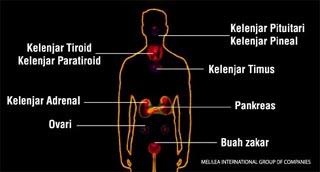 sistem endokren